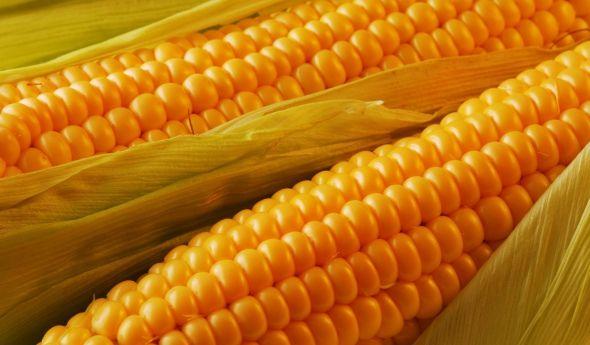 А ви знаєте, чи можна кукурудзу на дієті?
