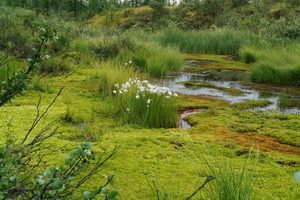 Як утворюються болота і що на них зростає