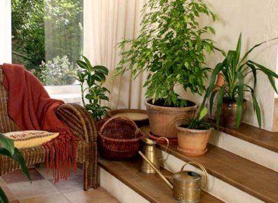 Як вибирати кімнатні рослини?