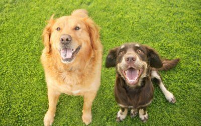 Яку породу собаки вибрати?