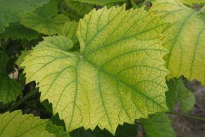 Листя рослин