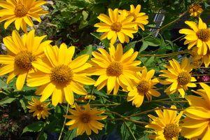 Технічні культурні рослини і їх фото