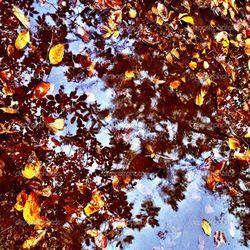 Чудова осінь